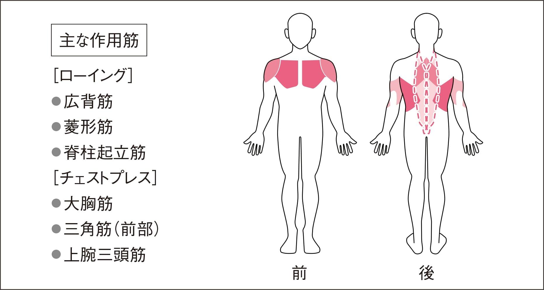 域 肩 関節 可動